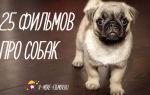Лучшие фильмы про собак для детей: комедии и не только