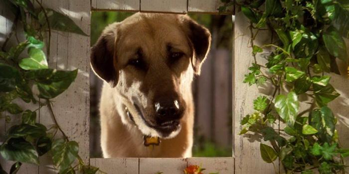 Пес из детской сказки Кошки против собак (2001)