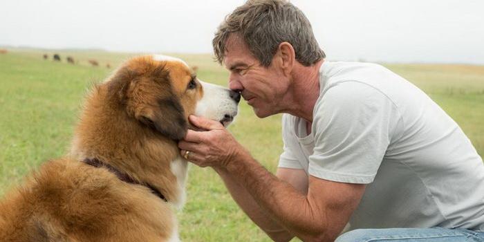 Кадр из нового фильма Собачья жизнь 2017 года