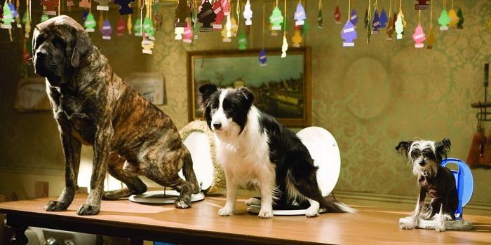 Собачки из детского фильма Отель для собак 2009 года