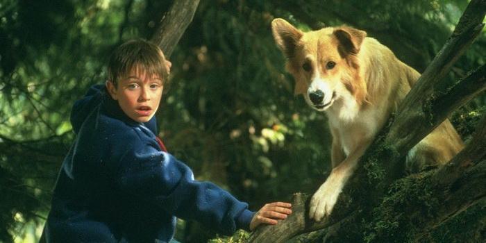 Кадр из фильма Бинго, 1991 год