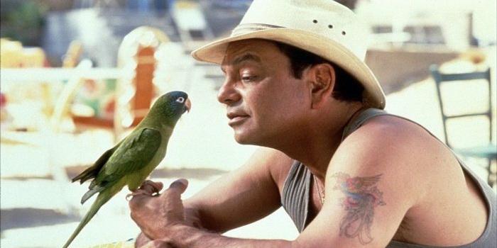 Попугай из фильма Поли (1998)
