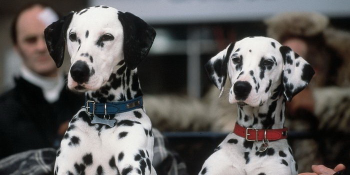 Собаки из франшизы 102 далматинца (2001)