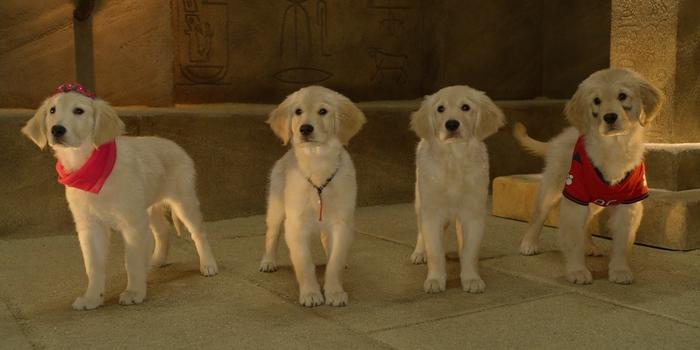Собачки из детской кинокартины Пятерка кладоискателей 2012 года