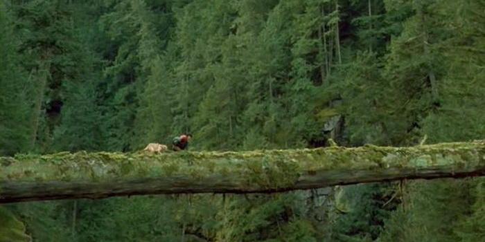 Картинка из фильма Далеко от дома: Приключения желтого пса (1995)