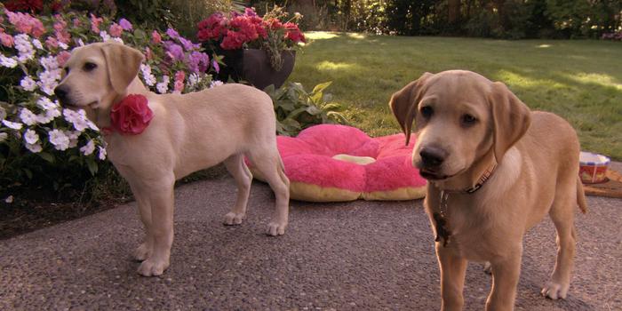 Кадр из кино Марли и я 2 (2011)