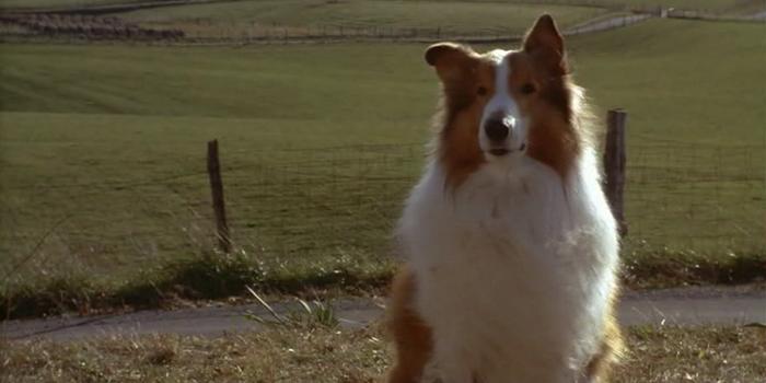 Главный персонаж из Лэсси (1994)
