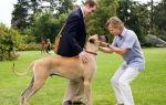 Кино про говорящих собак: список рейтинг фильмов